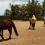 Apprendre avec les chevaux